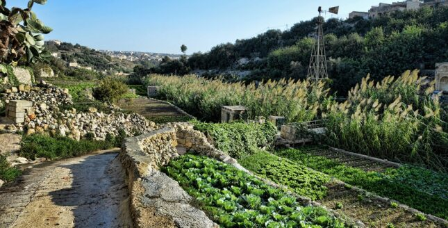 a list of things to do in kercem in gozo